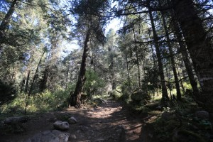 The trail through the Mexican pine forest