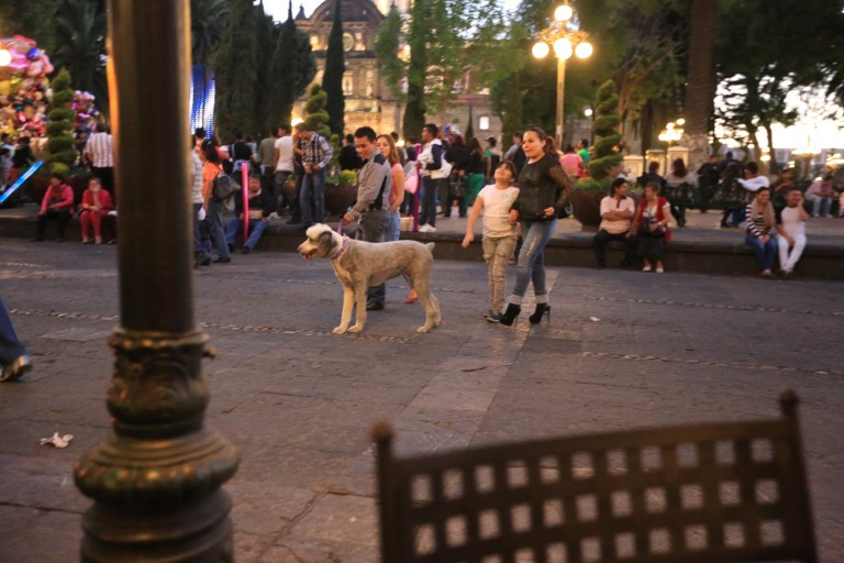 Contrary to a lot of ideas, Mexicans definitely treat their dogs as family members.  Not in all cases, but very frequently.
