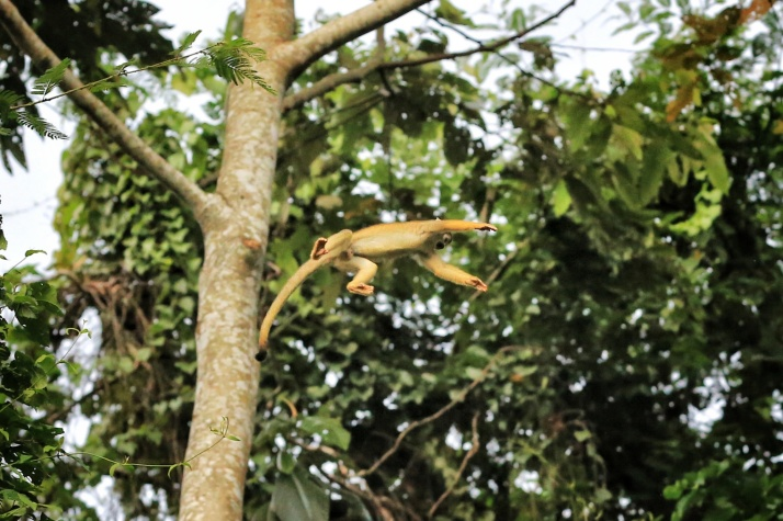 Watching the spider monkeys fly from tree to tree was such a treat