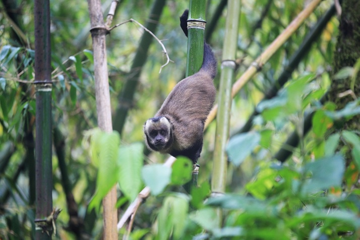 There were monkeys everywhere.   We saw so many monkeys that it just became a normal thing.  This was the very first one I saw.