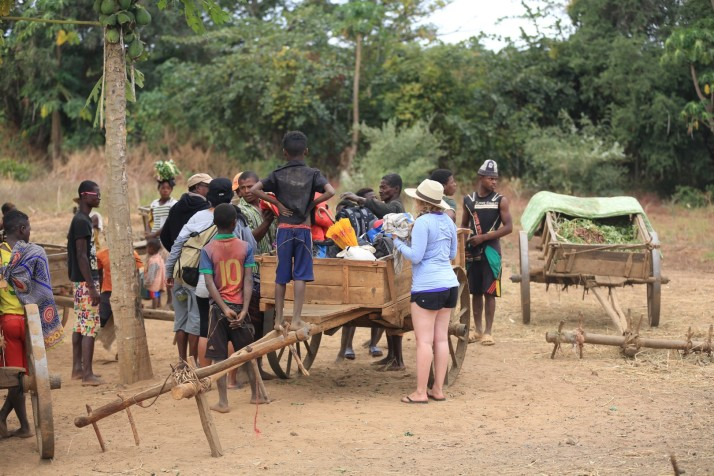 Helping us load into the zebu cart