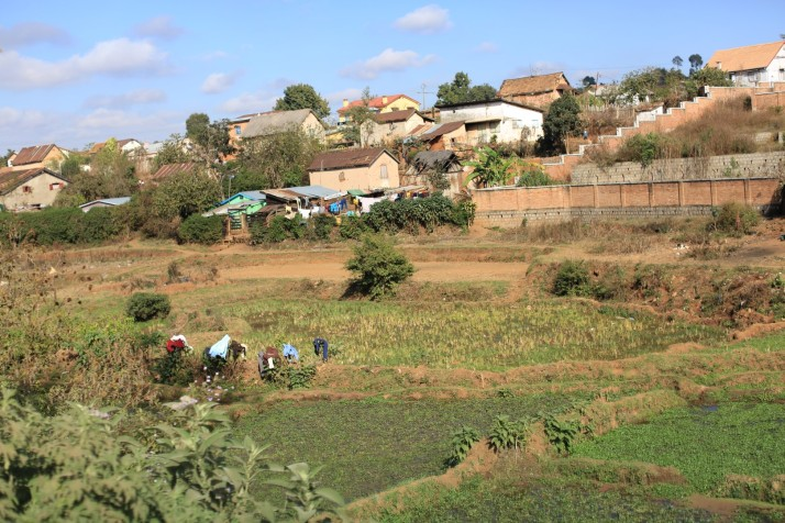 This rice field is 30 seconds from the center of the 2nd largest city in Mada