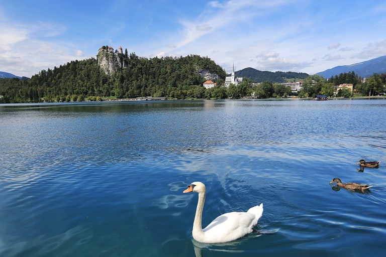 Oh, look, perfect water, swan, castle on the hill.  Fake.