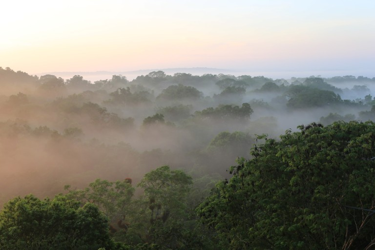 The cloudy mist over the jungle