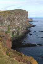 The puffin sanctuary in the West Fjords