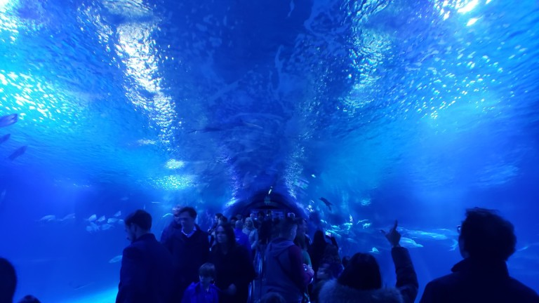 In the shark tunnel at the Oceanografico
